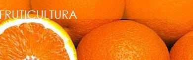 Nossos produtos atendem a cultura da fruticultura