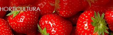 Nossos produtos atendem as horticulturas