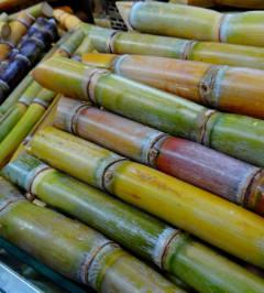 Os produtos NaanDanJain irrigam com excelência culturas de cana-de-açúcar